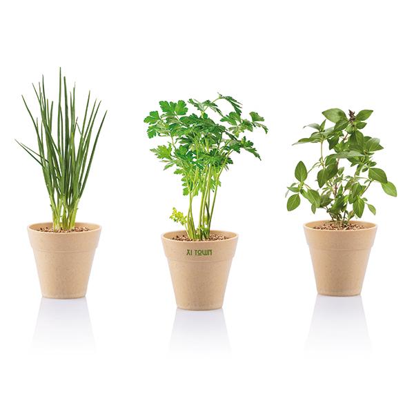 INP269399 Set erbe aromatiche Herb